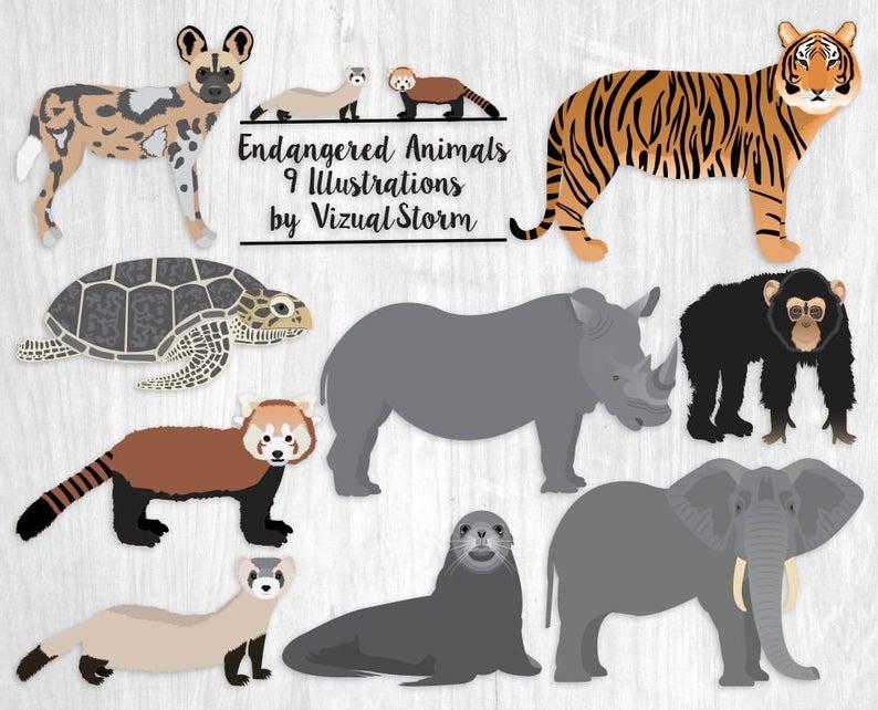 Endangered Animal Clipart Hand Drawn African Wildlife Africa Wild Dog Tiger  Ferret Red Panda Sea Lion Elephant Black Rhino Turtle Chimpanzee.
