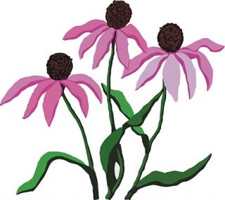 Kansas Native Plant Society: wildflowers, grasses, trees.