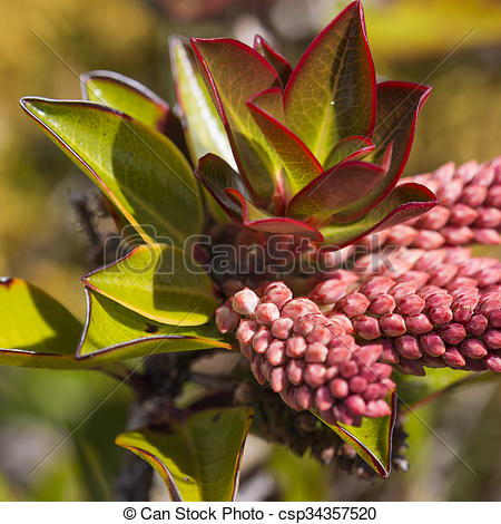 A very rare endemic plants on the plateau of Roraima.