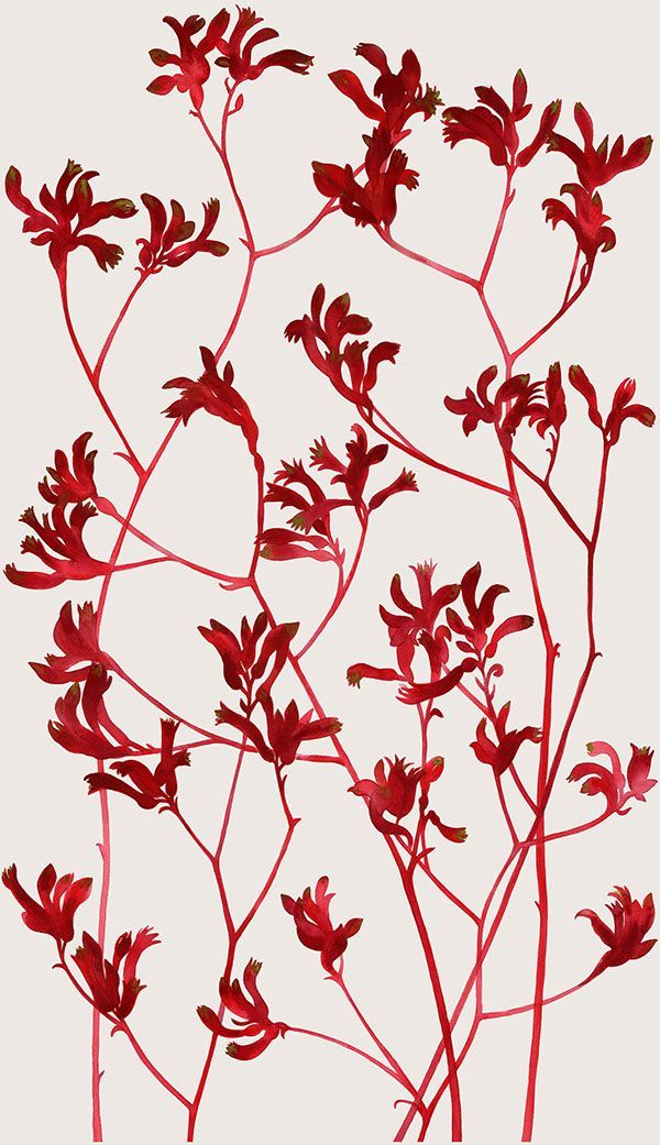 Painted designs featuring Australian native flowers and.
