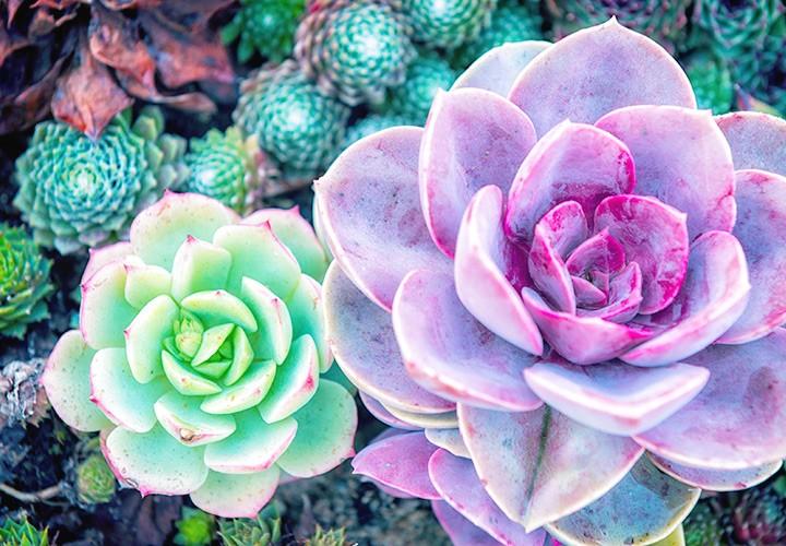 127 Stunning Desert Plants.