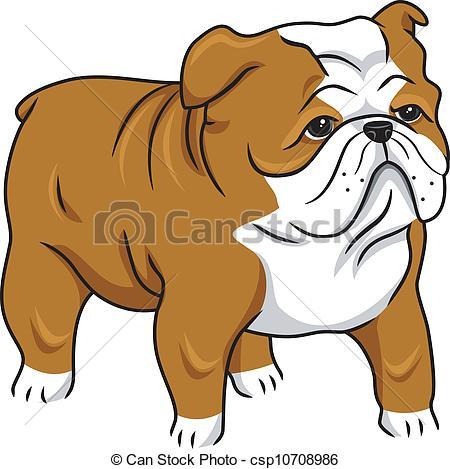 English bulldog Vector Clipart Illustrations. 781 English bulldog.