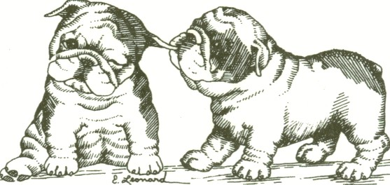 English bulldog puppies clipart.