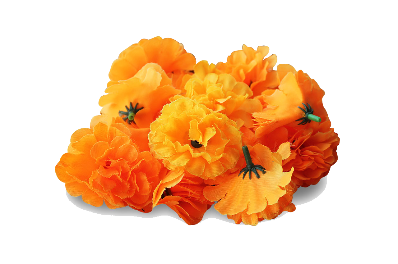Marigold PNG Images Transparent Free Download.