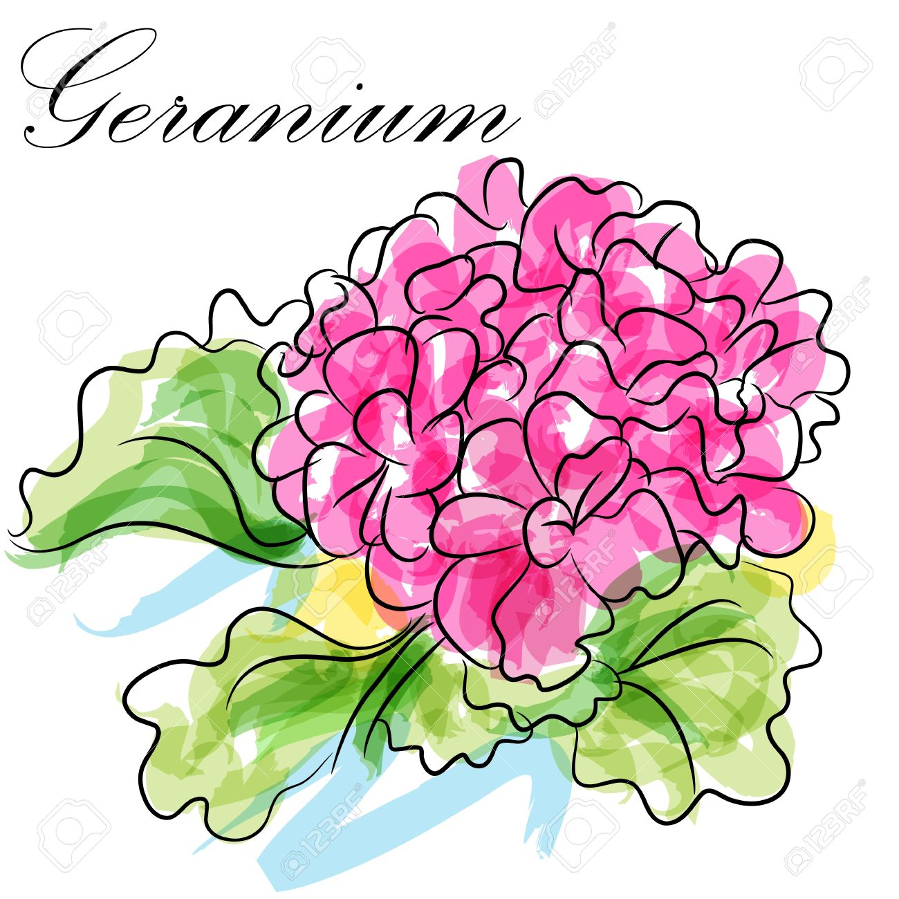 An Image Of A Pink Geranium Flower. Royalty Free Cliparts, Vectors.