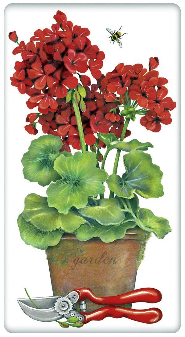 1000+ images about geraniums on Pinterest.