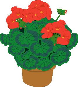 Gardening • The English Guide.