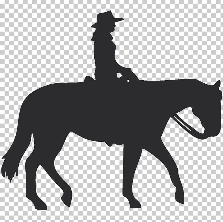 American Quarter Horse Equestrian Western Pleasure English.