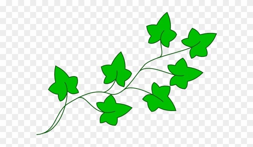 Ivy clipart english ivy, Ivy english ivy Transparent FREE.