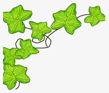 Free Ivy Leaf Clip Art with No Background.