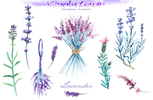 Watercolor Lavender Clip Art ~ Illustrations on Creative Market.