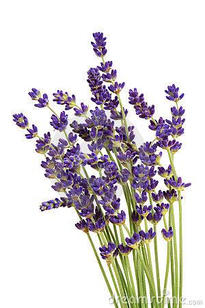 Lavender Clipart Page 1.