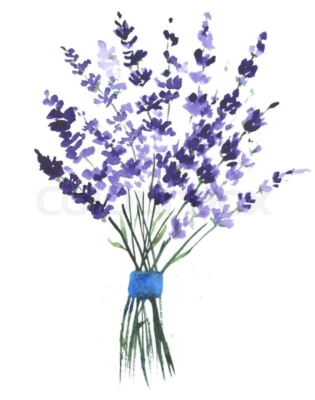 Watercolor Lavender Clip Art.