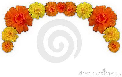 Marigolds Stock Illustrations.