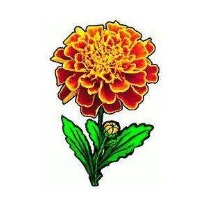 Marigold Clipart.