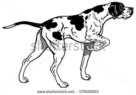 English Pointer Dog Stock Images, Royalty.