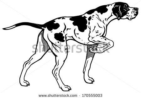 English Pointer Dog Stock Images, Royalty.
