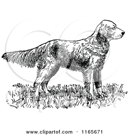 Clipart of a Retro Vintage Black and White English Setter Dog.