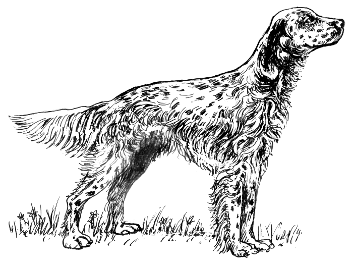 English Setter Clipart Clipground