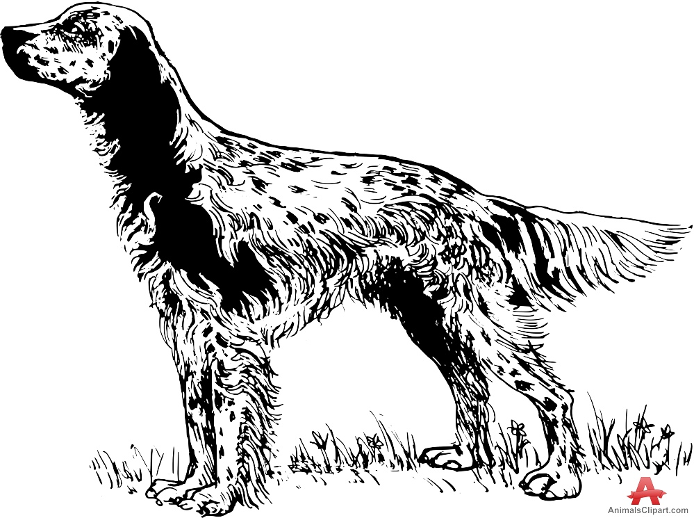 English setter clipart.