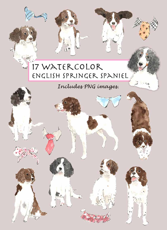 CLIP ART Watercolor English Springer Spaniel & Collar by Vianneart.