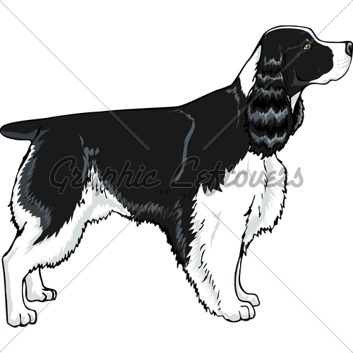 English Springer Spaniel Clipart Clipground