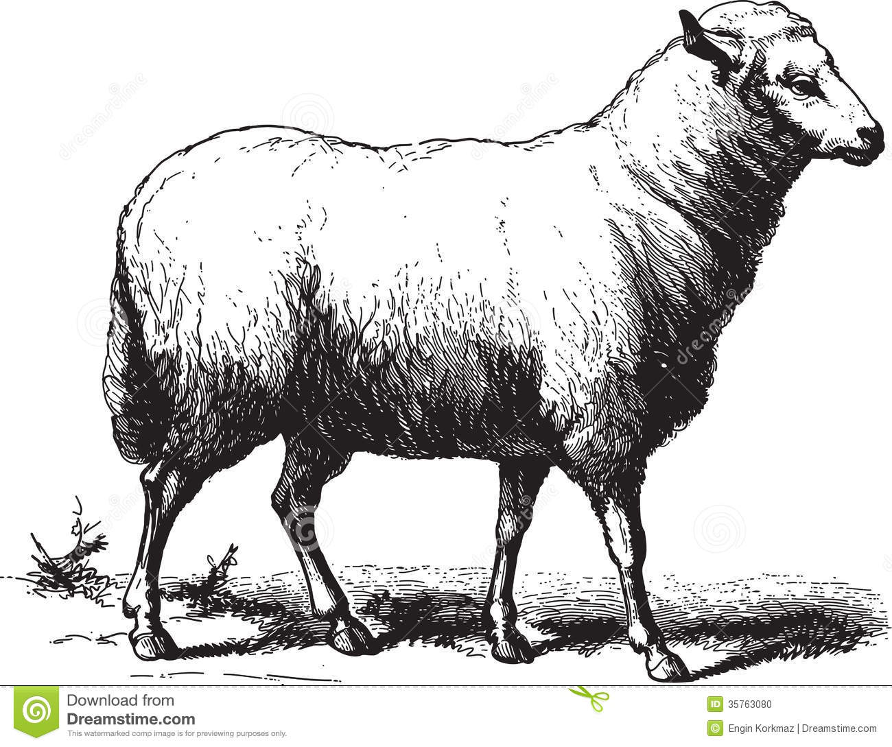 vintage sheep clipart #16