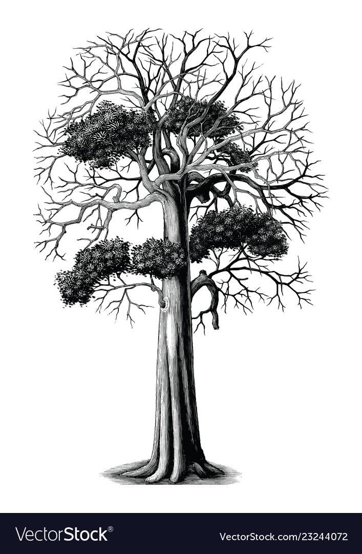 Tree hand drawing vintage engraving clip art.