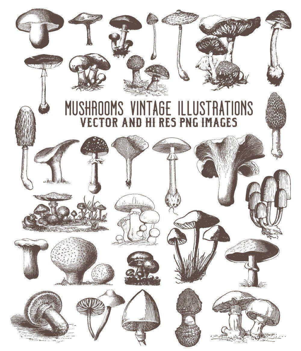 Mushroom Clipart, Vintage Mushroom Engraving Clipart, Fungi.