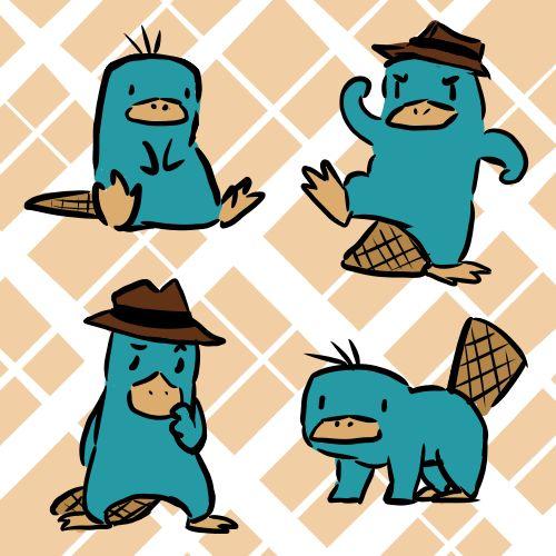 1000+ ideas about Platypus on Pinterest.