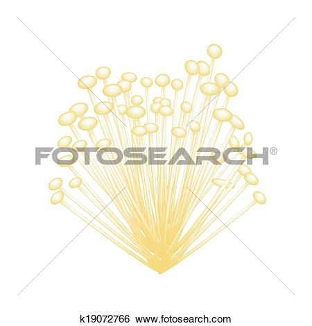 Clip Art of A Group of Enoki Mushrooms on White Background.