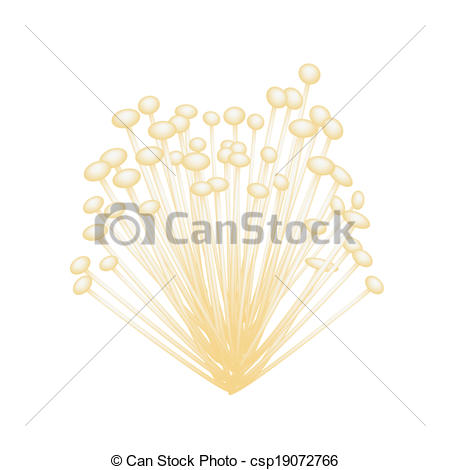 Clip Art Vector of A Group of Enoki Mushrooms on White Background.