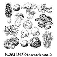 Enokitake Clip Art Illustrations. 43 enokitake clipart EPS vector.