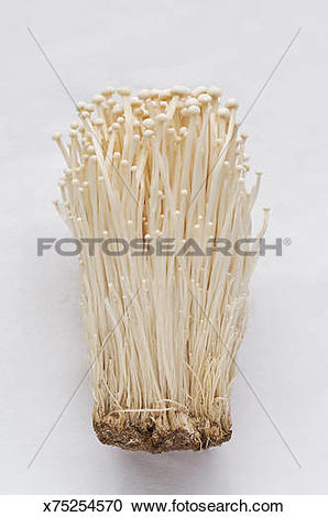 Stock Photography of Enoki mushrooms x75254570.