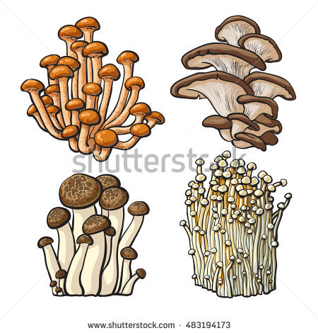 Enokitake Stock Photos, Royalty.