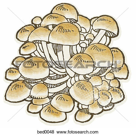 Stock Illustration of Enokitake mushroom bed0048.