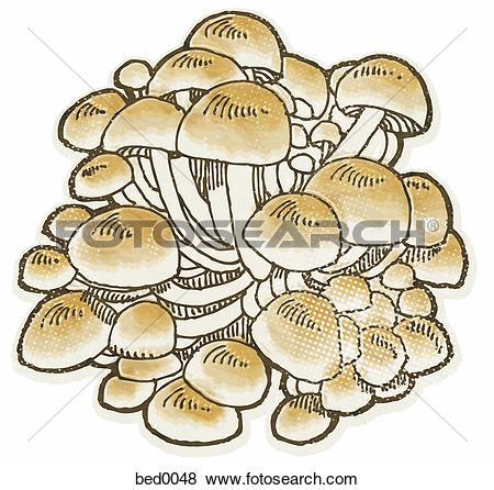 Stock Illustration of Enokitake mushroom bed0048.