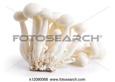 Pictures of Enokitake mushrooms k12080068.