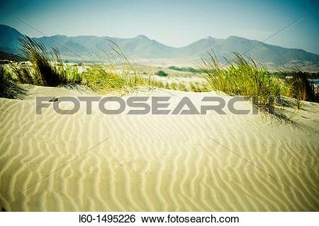 Stock Images of Dunes in ensenada de los Genoveses, Cabo de Gata.