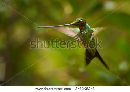 Ensifera Stock Photos, Images, & Pictures.