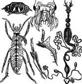 Entomology Clip Art.