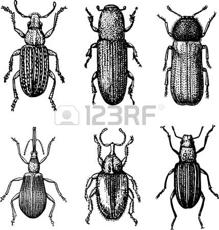 2,587 Entomology Stock Vector Illustration And Royalty Free.