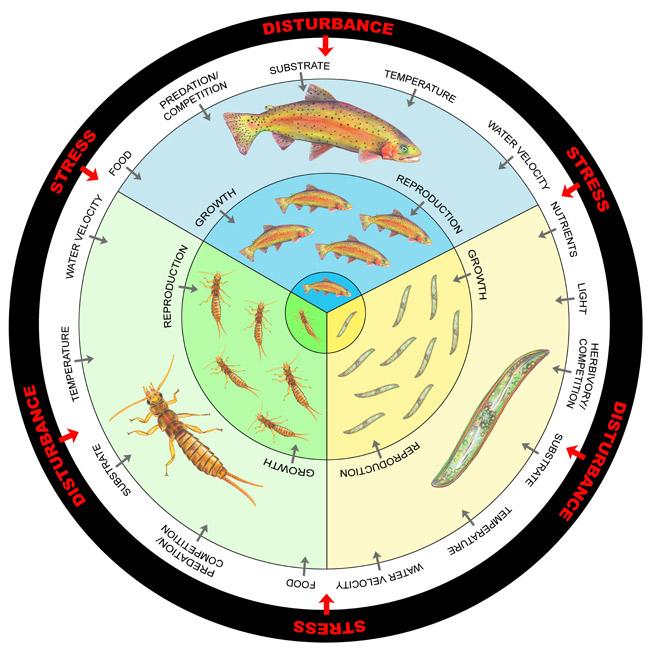Bioindicators: Using Organisms to Measure Environmental Impacts.