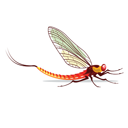 Ephemeroptera Clip Art, Vector Images & Illustrations.