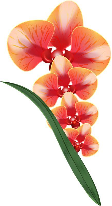 1000+ images about Orquídeas..são flores on Pinterest.