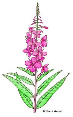 Summer Fireweed Kit by Noon, Amy.
