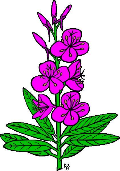 Ku Epilobium Angustifolium Clip Art at Clker.com.