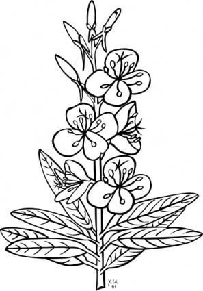 Ku Epilobium Angustifolium Outline clip art clip arts, free.