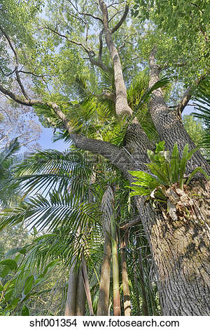 Stock Photo of Australia, New South Wales, Wanganui, epiphytes on.