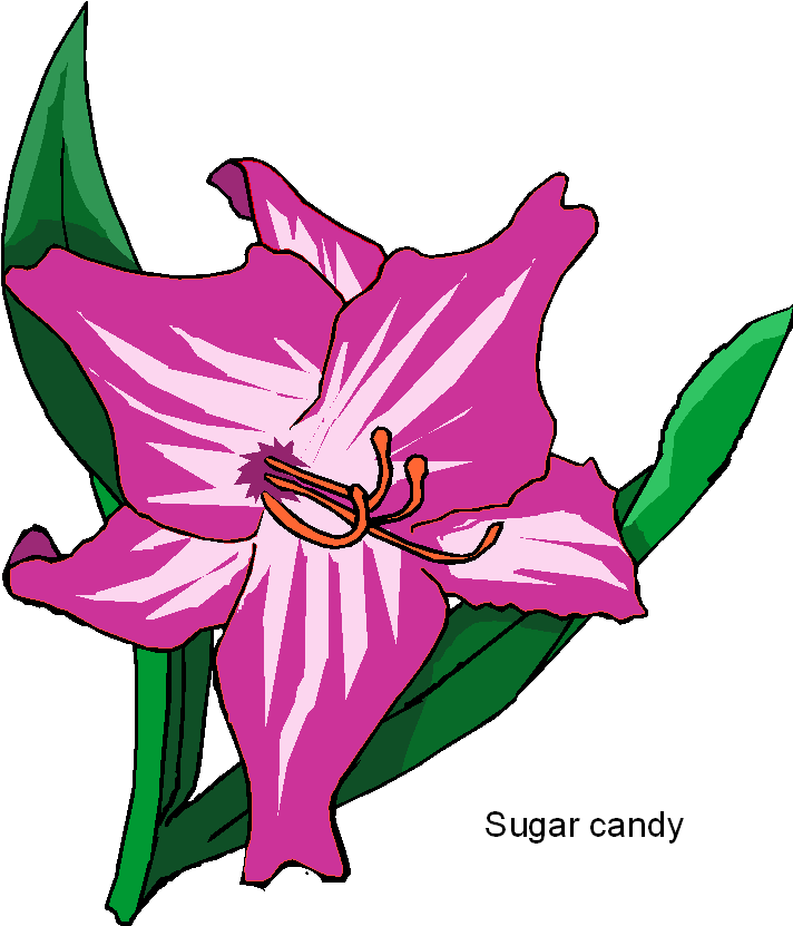 Images Of Candy.
